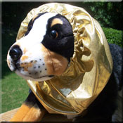 Hygenic Snoods for Dogs